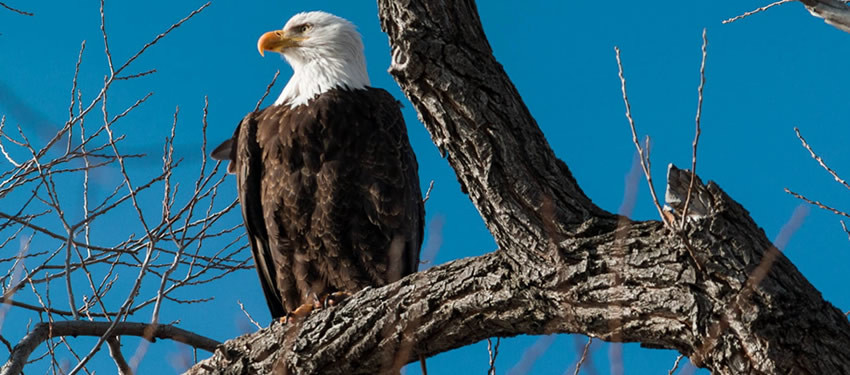 8 Essential Tips to Planning a Fantastic Day of Eagle Watching