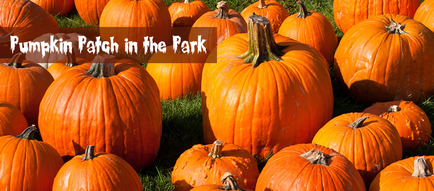 Pumpkin Patch in the Park