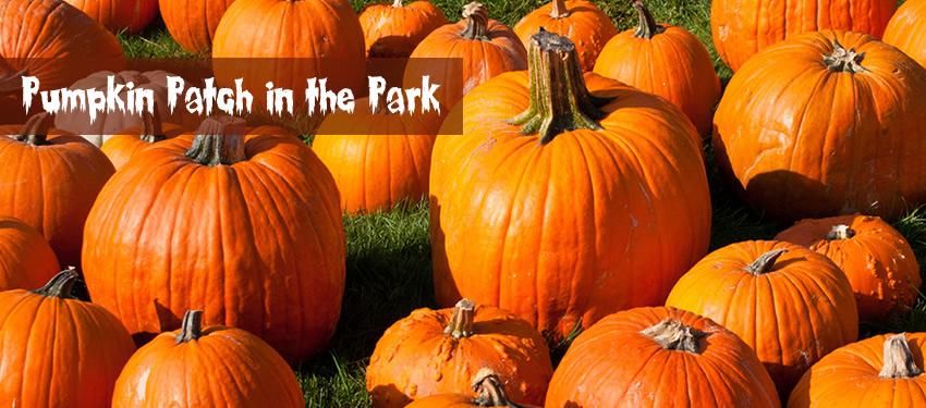 Pumpkin Patch in the Park