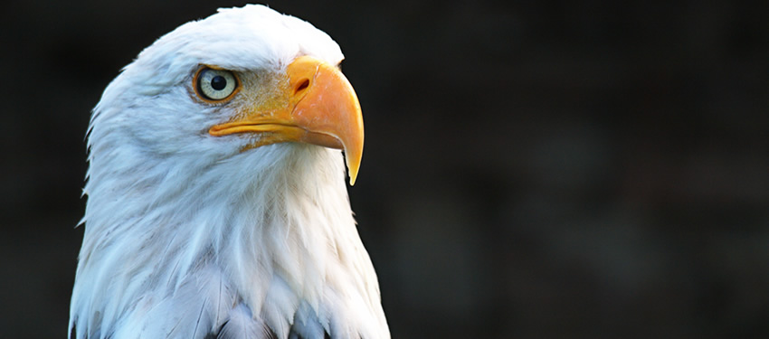 Brackendale Eagle Festival