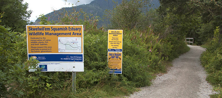 Walking Squamish's Estuary Trail